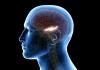 Otak Manusia